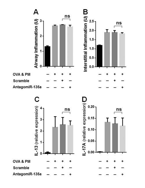 Inflammation (airway/interstitial) and the expression of cytokines in AntagomiR-135a injected mice exposed to OVA & PM.