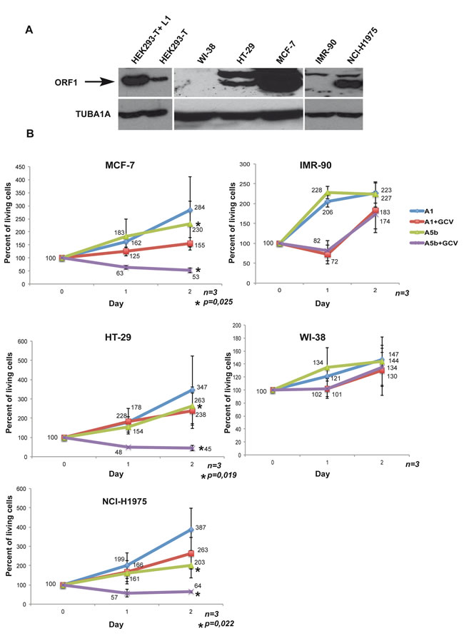 Selective targeting the growth of L1 ORF1/2 expressing cancer cells.