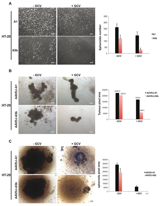 Targeting spheroid growth of HT-29 cells.