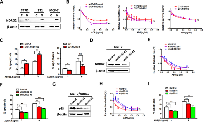 NDRG2 overexpression promotes ADR sensitivity in p53wt but not in p53 mutant cells.