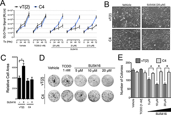 Arnt is required for the anti-proliferative effects of SU5416 in Hepa1 cells.