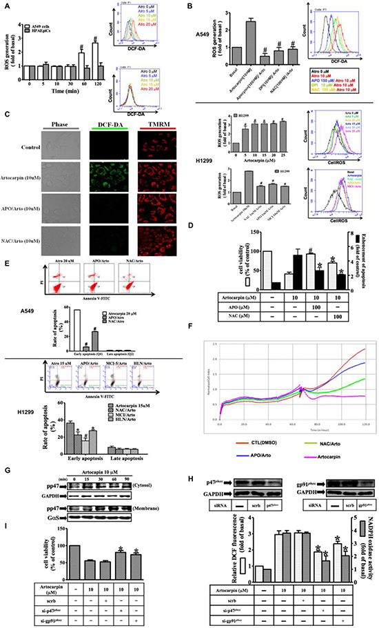 Artocarpin-induced activation of NADPH oxidase and generation of ROS triggers apoptosis in tumor cells.