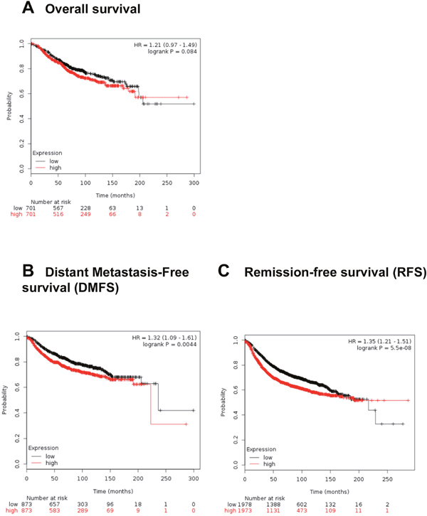 High RSU-1 mRNA expression is correlated with reduced distant metastasis-free survival and reduced remission –free survival in BC patients.