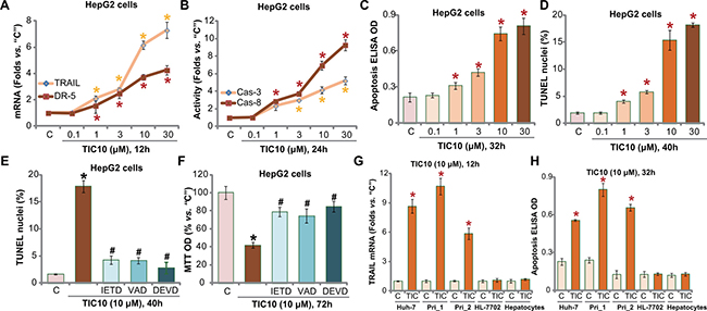 TIC10 induces TRAIL and DR5 expression, provokes apoptosis in HCC cells.