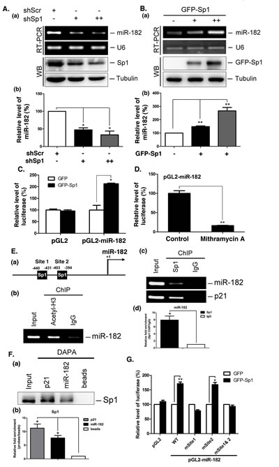 Sp1 regulates miR-182 expression.