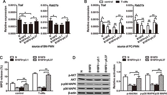 CTCs suppress the anti-tumor function of neutrophils.