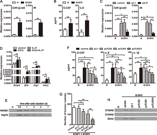 CTCs promote the expression of G-CSF and IL-6 in vivo.