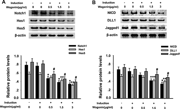 Effect of wogonin on Notch-1 signaling protein expression in BMSCs.