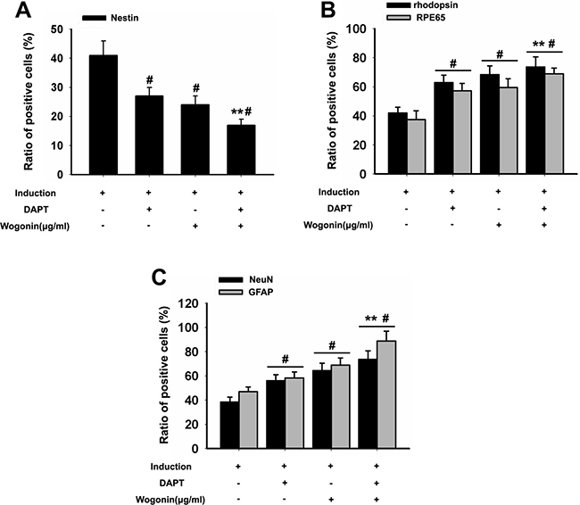 Effect of wogonin and DAPT on the expression of stemness and neuroretinal markers.