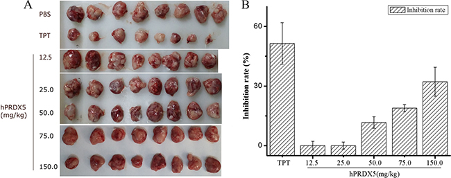 The anti-cancer bioactivity of hPRDX5 in C26-injected mice.