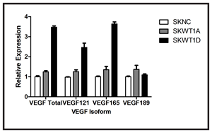 Effect of WT1 on VEGF isoform expression.