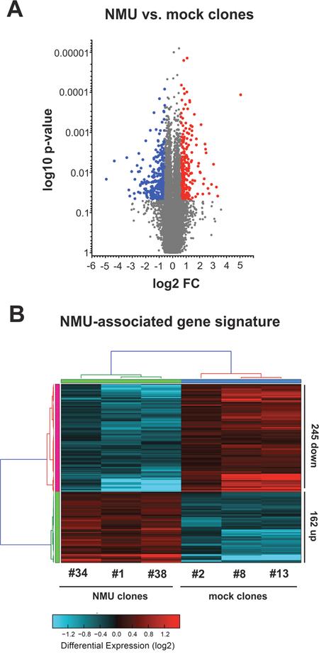 NMU-associated gene signature in NMUR2-positive breast cancer cells.
