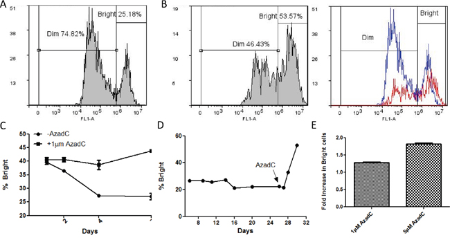 The effect of induced hypomethylation on the distribution of cells in Bright and Dim GFP expression classes.