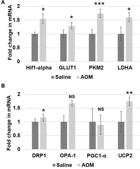 Metabolic and mitochondrial changes in AOM rat models.