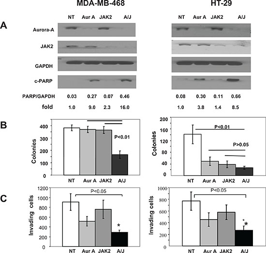Figure 2. Depletion of Aurora A and JAK2 kinases is highly effective at inducing apoptosis and at inhibiting anchorage-independent growth and invasion.
