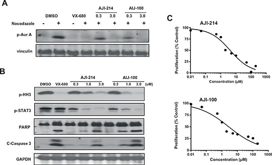 Figure 5. AJI-214 and AJI-100 inhibit the phosphorylation of Aurora A, Histone H3 and STAT3, induce apoptosis and inhibit anchorage-dependent proliferation in cancer cells.