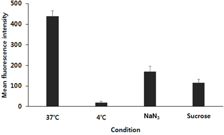 The mean fluorescence intensity of curcumin in FPCHN-30 under different incubate conditions in terms of different temperatures (37°C or 4°C) and co-treatment of 0.07 M of NaN3 or 0.45 M of sucrose for 4 h (n=3, mean ± SD).