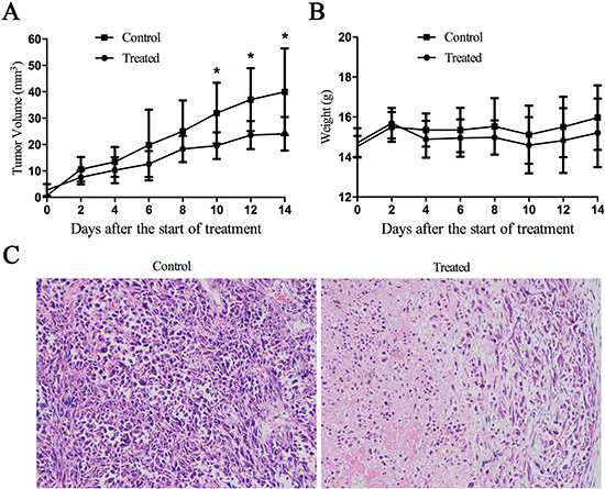 Cu(sal)(phen) suppresses tumor growth in vivo.