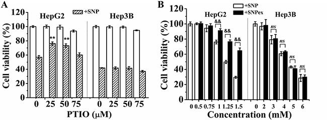 NO mediates SNP-induced cytotoxicity in HepG2 cells.