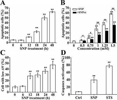NO mediates SNP-induced apoptosis.