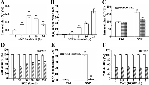 O2•− instead of H2O2 plays an important role in SNP-induced cytotoxicity.