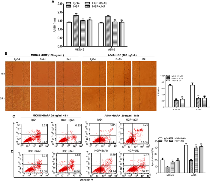 BsAb inhibits HGF-induced cancer cells proliferation, migration, and apoptosis resistance.