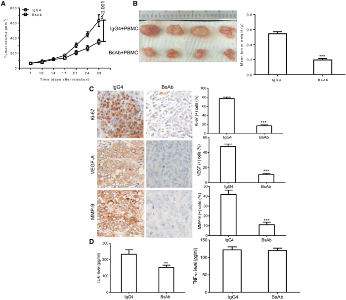 BsAb inhibits tumor development and chronic inflammation in vivo.