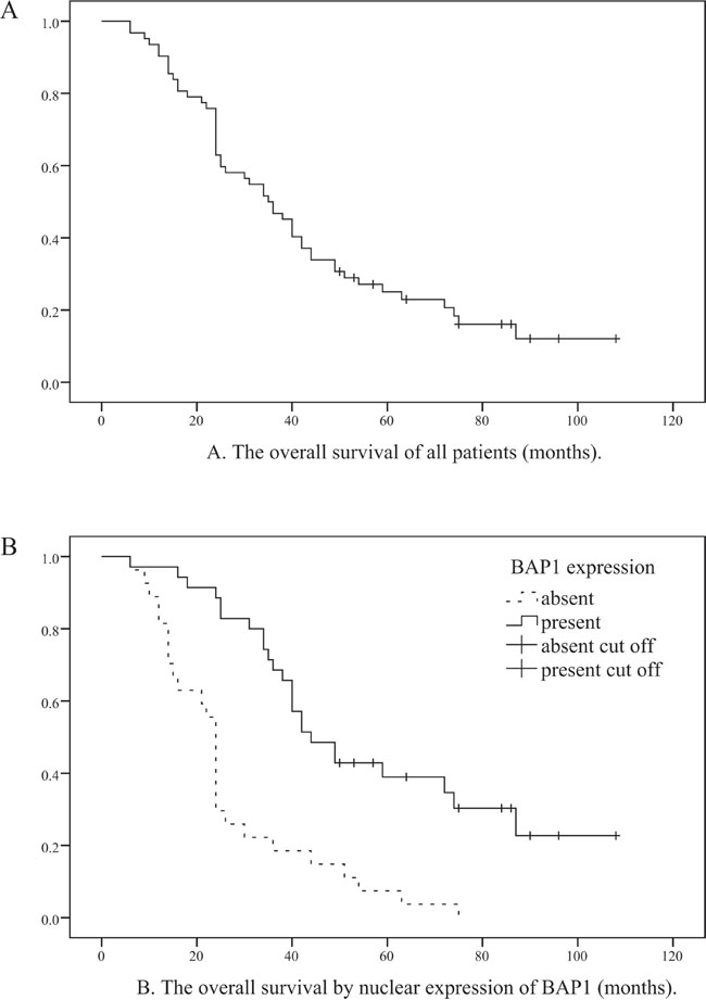 Relationship between overall survival of all OMM patients and nuclear BAP1 protein expression.