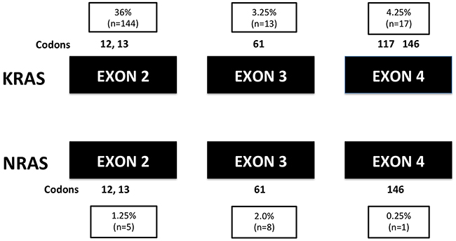 The mutant exons and codons of all RAS mutations (n=400).