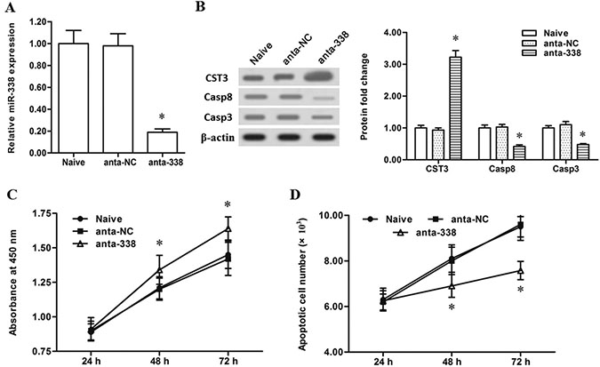 Slience of miR-338 promoted the proliferation and decreased the apoptosis of esophageal cells.
