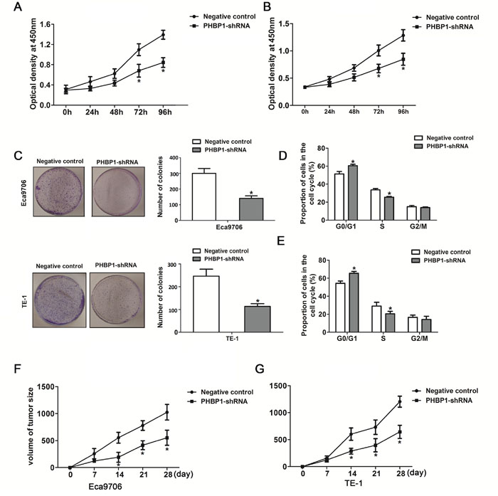 ShRNA-mediated knockdown of PHBP1 inhibits ESCC cells proliferation and tumor formation of ESCC cells.