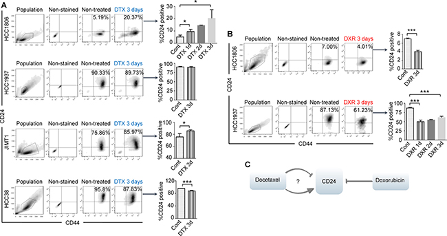 Docetaxel (DTX) induces CD24+/high to CD24−/low, or CD24−/low to CD24+/high transitions or no change of CD24 expression in BC cell lines, while doxorubicin (DXR) only induces CD24+/high to CD24−/low transitions.