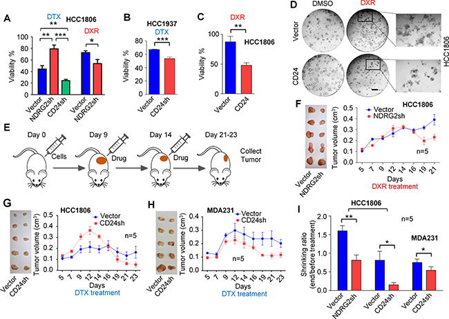 Targeting CD24 and its inhibitor gene NDRG2 by shRNAs improved chemotherapy sensitivity in vitro and in vivo.