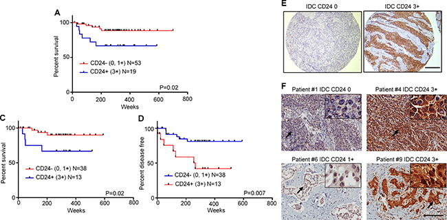 High expression of CD24 in archival tumor specimens from TNBC patients treated with taxane-based chemotherapy associate with poor prognosis.