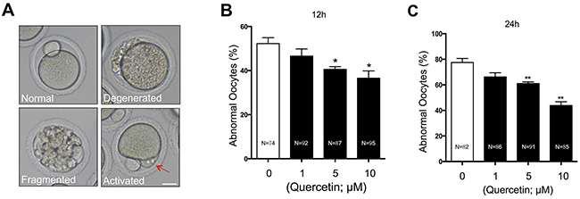 Effects of quercetin on oocyte morphology during postovulatory aging.