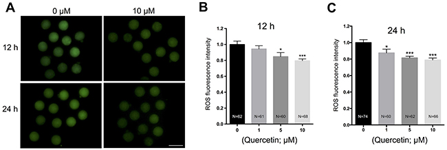 Effects of quercetin on ROS generation in aging oocytes.