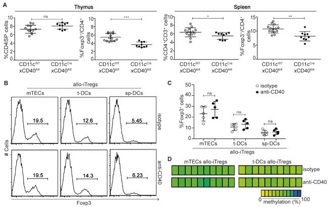 CD40-CD40L signaling is not critically required for generation of stable allo-iTregs.