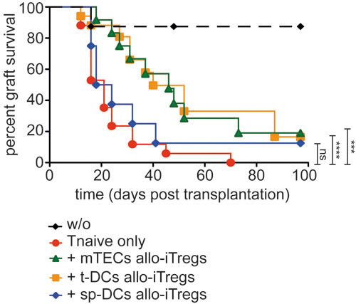 Allo-iTregs generated by thymic APCs very efficiently suppress skin allograft rejection.