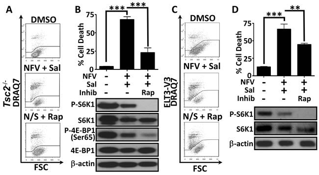 Dual treatment kills cells in a mTORC1-dependent manner.
