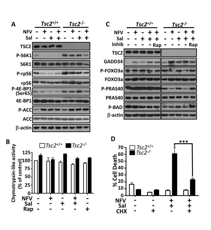 Mechanisms of nelfinavir/salinomycin-induced cell death.