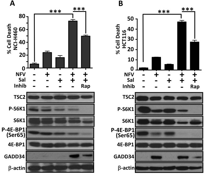 Sporadic cancer cell lines with hyperactive mTORC1 are also sensitive to nelfinavir and salinomycin.