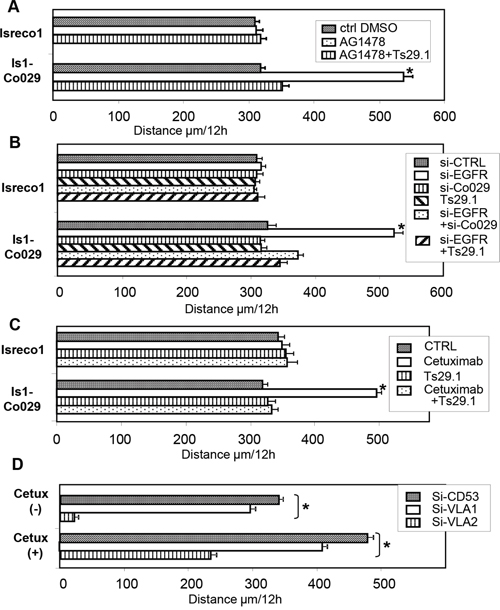 The effect of EGFR on cell motility is related to Co-029 expression.