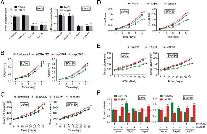 Knockdown of p63 promotes CRC cell growth through miR-124/iASPP feedback.