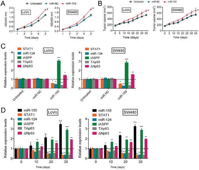 miR-155 regulates CRC growth through the p63 pathway.