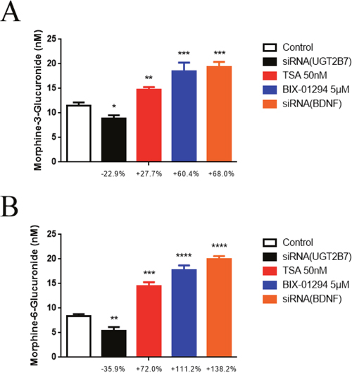 Epigenetic inhibitors and BDNF repression induce the alterations of UGT2B7 enzymatic activity and morphine regioselective glucuronidation in CRC.