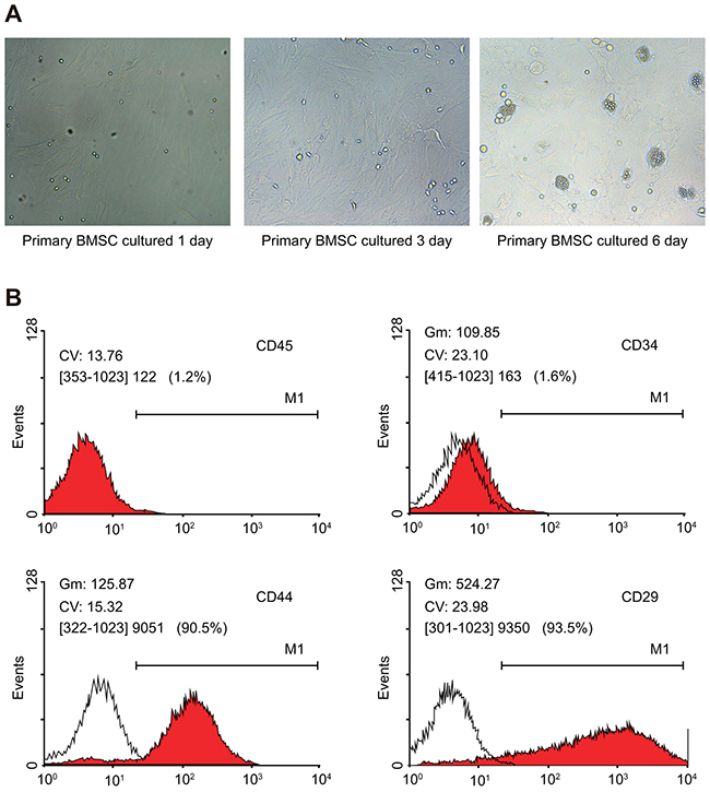 Characterization of morphological changes and phenotype of rat BMSCs.