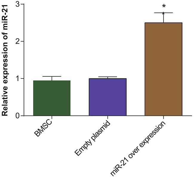 The miR-21 expression in BMSC, pLVX-BMSC and pLVX-miR-21-BMSC groups.