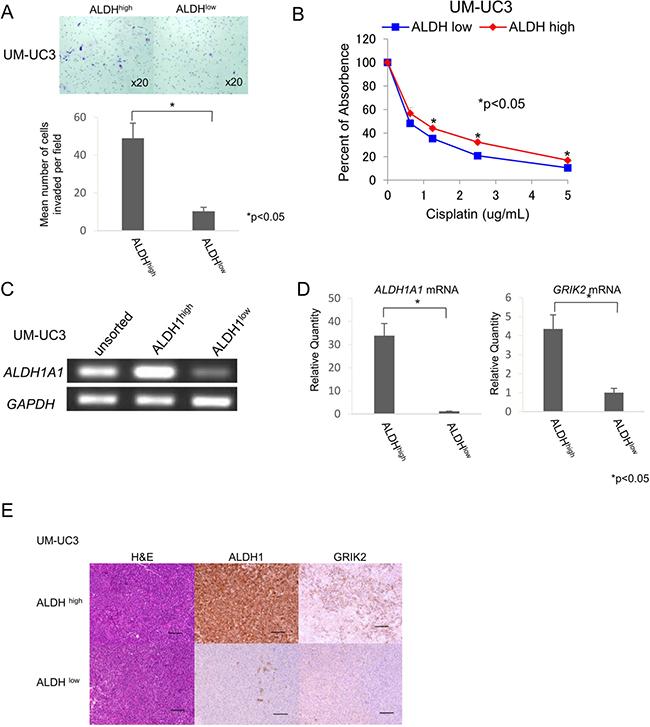 ALDH1high cells have properties of CSCs/CICs.