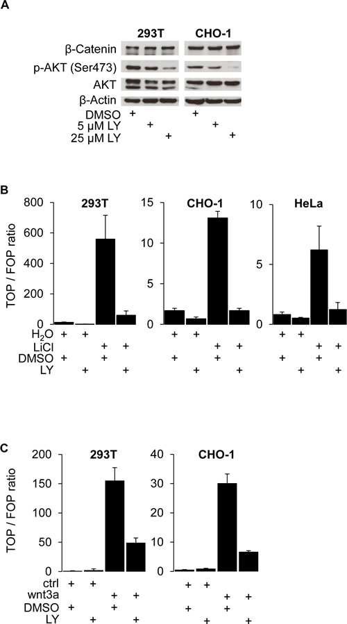 PI3K activity is required for β-Catenin mediated transcription and WNT target gene expression.