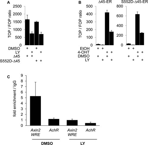 PI3K activity is required for β-Catenin transcriptional transactivation beyond serine 552 phosphorylation and increases β-Catenin binding to WNT target gene promoters.